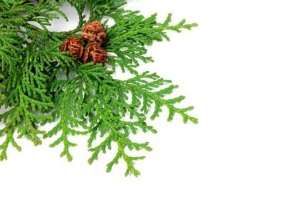 樹木系 イメージ写真